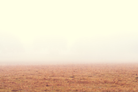 dismal: Open grassy field meadow pasture in the fog looking empty dismal depressing desolate bleak stark grim dramatic moody drab dim dull Stock Photo