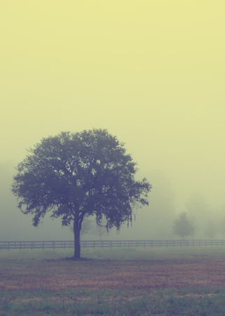 drab: Lonely solitary tree in an open grassy field meadow pasture in the fog looking empty dismal depressing desolate bleak stark grim dramatic moody drab dim dull with retro vintage filter