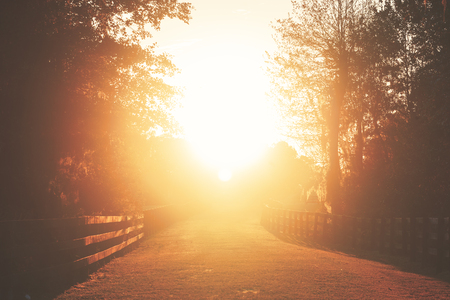 transcendence: Rural country farm ranch grass road with three board wood fences under sunset or sunrise sunbeams with lens flare looking romantic divine heavenly mysterious warm serene transcendent