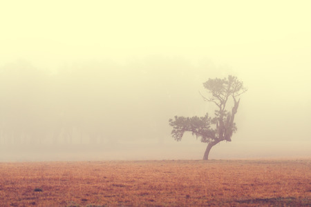 drab: Lonely solitary tree in an open grassy field meadow pasture in the fog looking empty dismal depressing desolate bleak stark grim dramatic moody drab dim dull