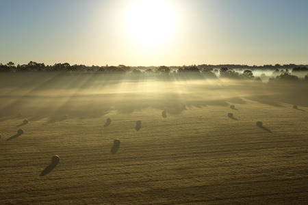 hayroll: Hay rolls in a field meadow at sunrise sunset with sunbeams and fog on a farm ranch in the rural countryside
