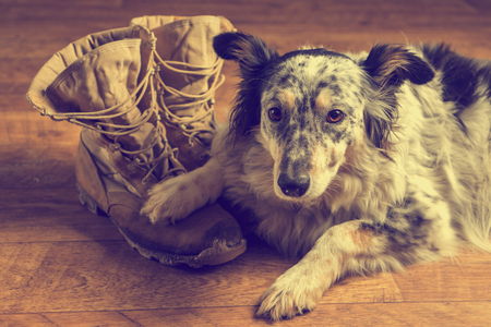 Border collie Australian shepherd dog lying on veteran military combat work construction boots looking sad grief stricken in mourning depressed abandoned alone bereaved worried feeling heartbreak with vintage filter