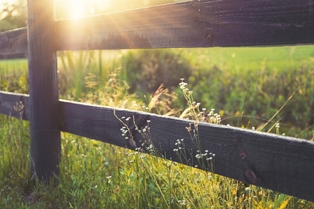 fencepost: Sunrays on rural black country fence with lesser prairie fleabane little white flowers growing wild on both sides in peaceful romantic setting