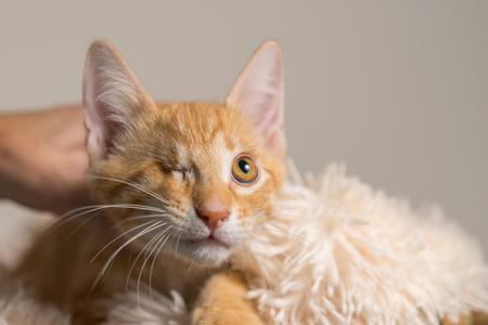 Junge gelb inländischen shorthair Katze Kätzchen liegend auf weiche Decke mit einem Auge suchen