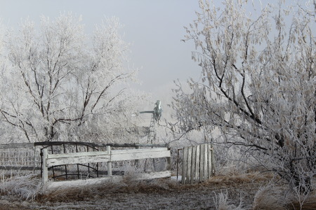 acreage: Winter Frosted Trees, Fence and Windmill Stock Photo