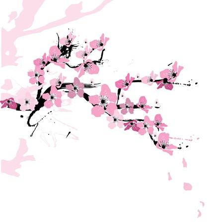 Illustration of cherry blossom Illustration