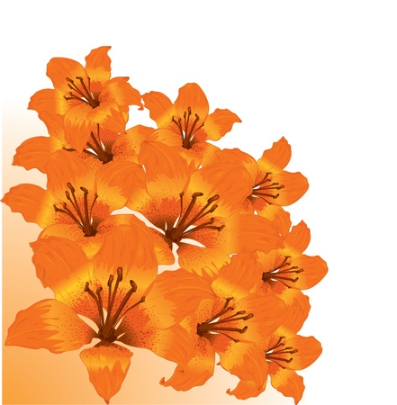 tiger lily: Vector floral border
