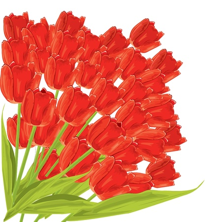 Bunch of red tulips. vector illustration  Vector