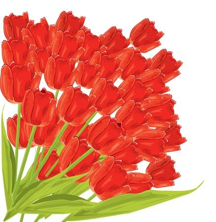 Pęczek tulipanów czerwony. Ilustracja wektora