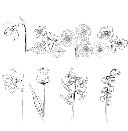 viola: collection of flower sketches