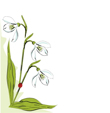 snowdrops: Vertical floral design element with snowdrop