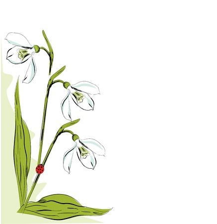 snowdrop: Vertical floral design element with snowdrop
