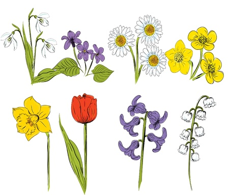 snowdrop: Vector illustration of Spring Flowers set