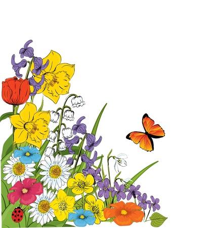 snowdrop: floral background  Illustration