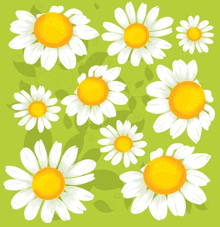 white daisy: Seamless flowers pattern
