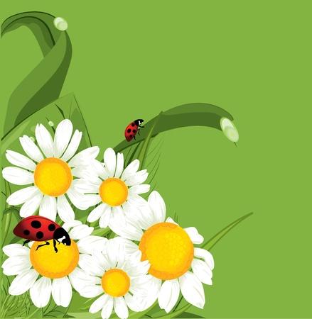 vector ladybird green background  Vector