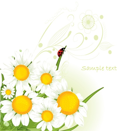 chamomile design Stock Vector - 9370990