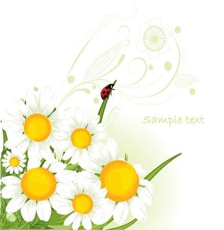 kamille: Kamille design  Illustration