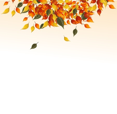 fall border: Background of autumn leaves.