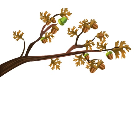 nut trees: acorns
