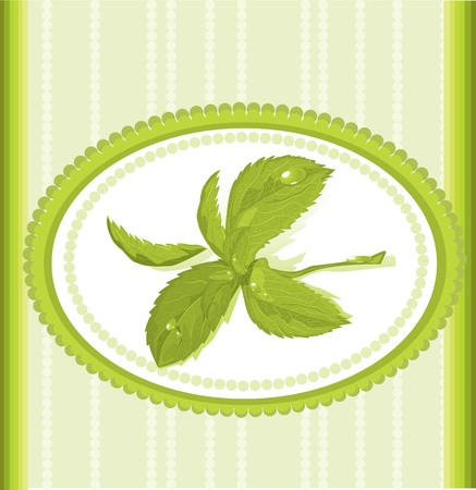 spearmint: ornament mint frame