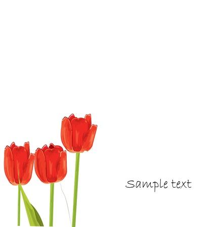 tulipe rouge: carte de printemps tulipe rouge Illustration