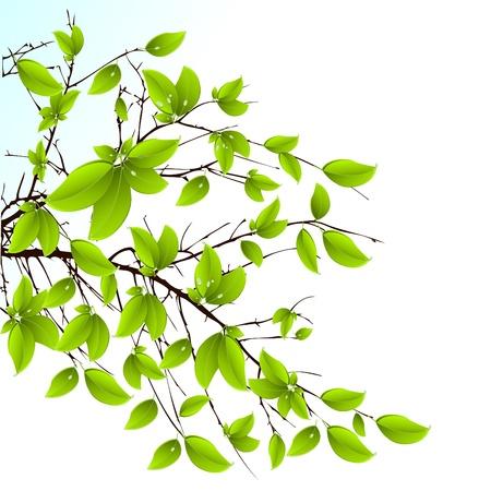 fresh green leaves background Illustration