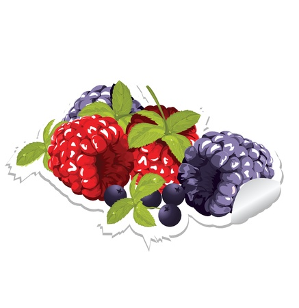cranberry illustration: label with berries Illustration