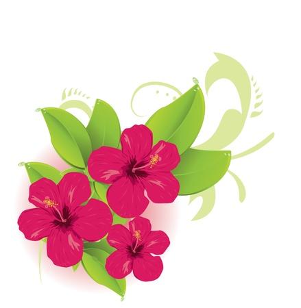 fiori di ibisco: Fiore tropicale Vettoriali