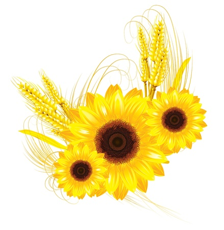 sunflower and wheat background Vector
