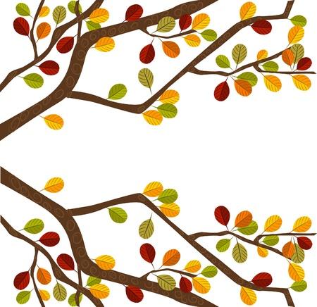autumn leaf frame: Rama de �rbol en oto�o