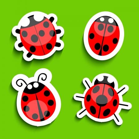 lady bug: Ladybug
