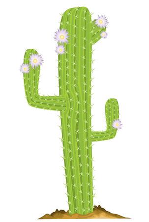 cactus desert: Green cactus