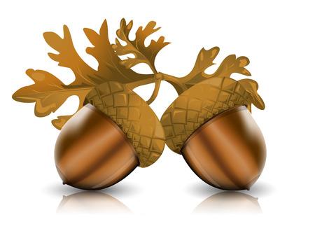 acorn: Acorns with leaves