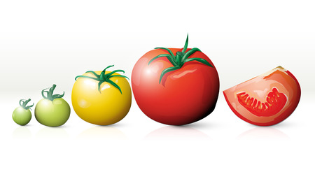 Growing tomatoes Vector Illustration