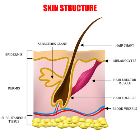Huidstructuur Stock Illustratie