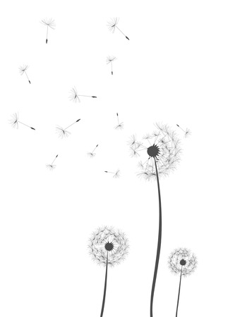 dandelion wind: Dandelion background Illustration