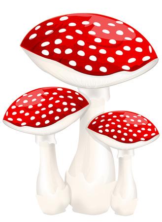붉은 독 버섯