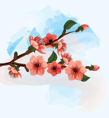 Cherry flower vector illustration