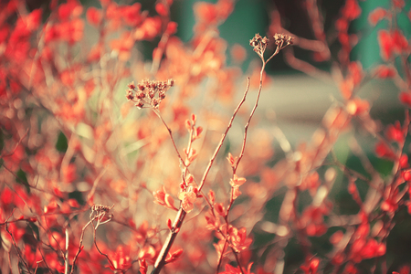 50mm: flowers wild background, garden colors in summer