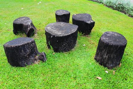 Stump in the garden