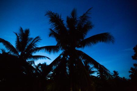Cocoanut Silhouette Twilight