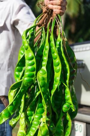 strange vegetable thailand