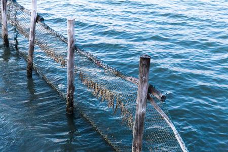 nets fish