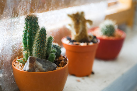 Various Potted Cactus
