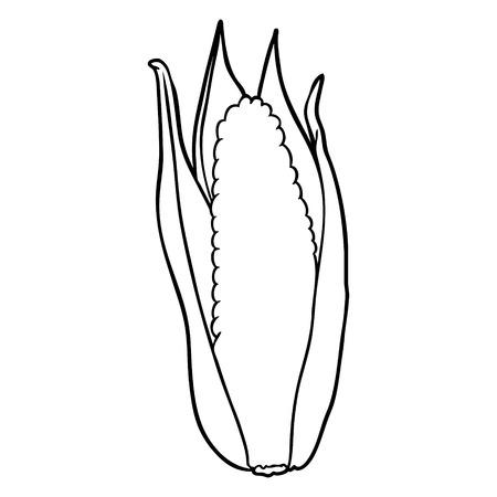 Hand drawn organic corn Illustration