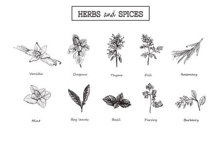 Herbs and spices set. Medicinal herbs. Organic healing herbs.