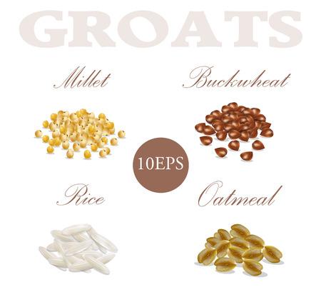 Millet, buckwheat, rice, oatmeal. Groats. 10 EPS. Vector illustration