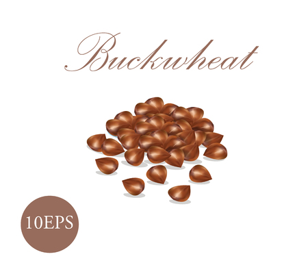 grain: Buckwheat grain. Grain vector illustration. EPS10  Groats