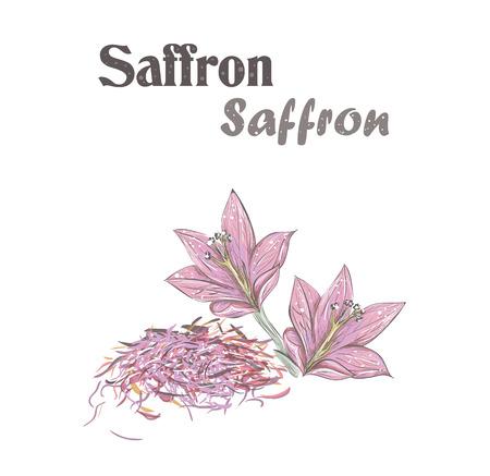 Saffron spice. Crocus flower. Skech Saffron illustration. Illustration